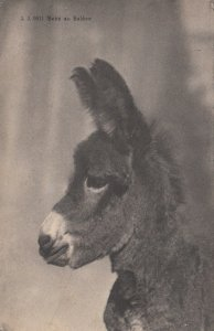 Donkey Portrait , 1918 ; Bebe au Saleve