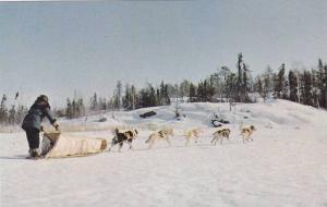 Dogsled Team Heading Home, Yellowknife, Northwest Territories, Canada, 40-60´s