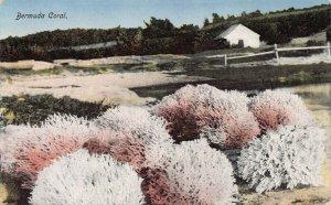 Bermuda Coral, Bermuda, Early Postcard, Unused