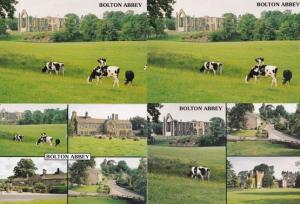 Cows Grazing at Bolton Abbey Yorkshire 4x Postcard s