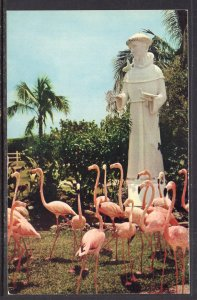 Flamingoes,Statue of St Francis of Assisi,Miami's Rare Bird Farm,FL