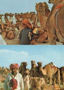 Dubai Old Man Boy & Camels 2x Postcard s