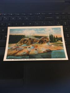 Vintage Postcard;Grotto geyser cone, Yellowstone Park