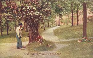 Indiana Winona Lake Tree Spring