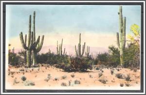 Desert Saguaro Cactus Undivided Azo - [MX-272]