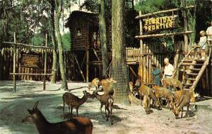 SILVER SPRINGS, FL Florida TOMMY BARTLETT'S DEER RANCH Petting Zoo~Kids Postcard