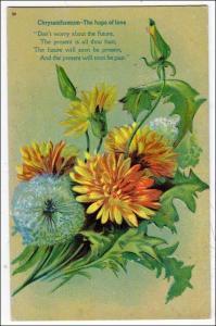 Chrysanthemum - The hope of love