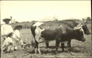 Mexico Farming Agriculture Oxen Plow Labrodores Arando Latierra RPPC