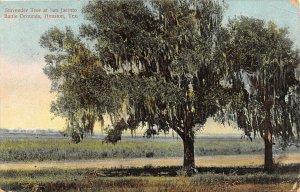 G22/ Houston Texas Postcard 1909 Battle Grounds San Jacinto Surrender Tree