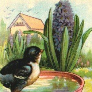 Bird at birdbath purple hyacinths Peace and Joy at Easter