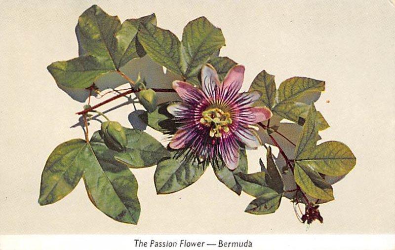 Bermuda Postcard Old Vintage Island Post Card Passion Flower of Bermuda Unused