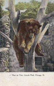 CHICAGO, Illinois, PU-1912; Bear On Tree, Lincoln Park