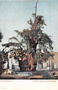 MEXICO CITY~ARBOL de la  NOCHE TRISTE~NIGHT OF SORROWS~JCS #552 POSTCARD 1900s
