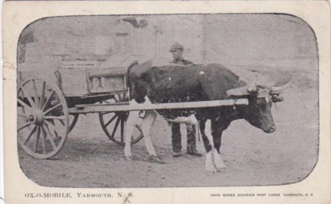 Canada Nova Scotia Yarmouth Ox-O-Mobile Ox Cart 1905