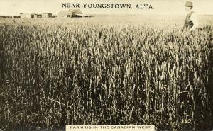 canada, YOUNGSTOWN, ALTA., Farming in the Canadian West (1915)  RPPC (2)