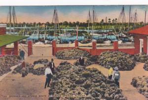 Florida Tarpon Springs Sponges and Sponge Boats