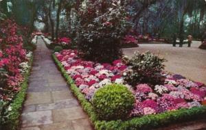 Alabama Mobile Bellingrath Gardens Flagstone Walk Lined With Camellias and Az...