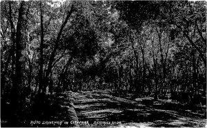Beatrice Nebraska Auto Driveway City Park 1915 RPPC Photo Postcard 21-7341