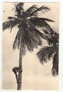 RP  SENEGAL (A O F ), Recolte des noix de coco, 30-50s