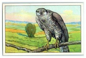 Goshawk, German Birds of Prey, Echte Wagner Trade Card *VT31T