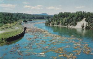 Lake Superior, Pulp Logs Floating Down the Nipigon River to the Paper Milll, ...