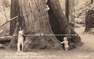 RP: Hollow Red Wood Tree , Muir Woods Nat'l Monument, CA , 30-40s ; ZAN 258