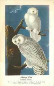 Audubon Barton Cotton 1959 Snowy Owl Nyctea Postcard 10843