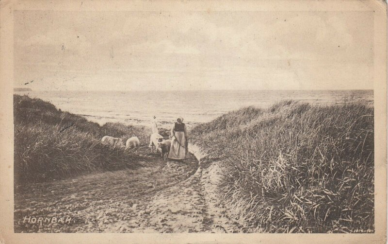 HORNBAEK , Danmark : 1908 ; Woman & sheep at beach