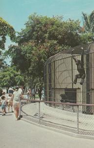 KEY BISCAYNE, Florida , 50-70s; Crandon Park Zoo, Chimpanzee Cage