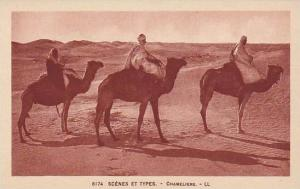 People Riding Camels, Scenes Et Types, Chameliers, Africa, 1900-1910s