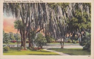 Trees With Spanish Moss Tropical View Lake City Florida