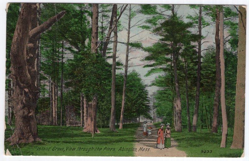 Abington, Mass, Island Grove, View through the Pines