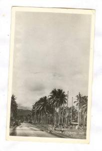 RP, Palm Trees, One Of Many New Guinea Highways, New Guinea, 1920-1940s