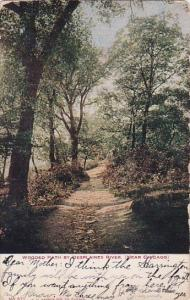 Illinois Chicago Wooded Path By Desplaines River