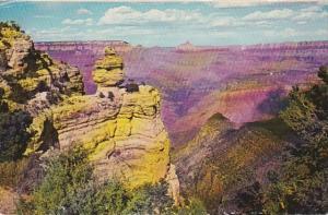 Arizona Grand Canyon Duck On The Rock