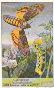 Liebig Trade Card Moths No 2 De Doodshoofdvlinder