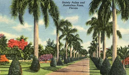 FL - Stately Palms & Australian Pines