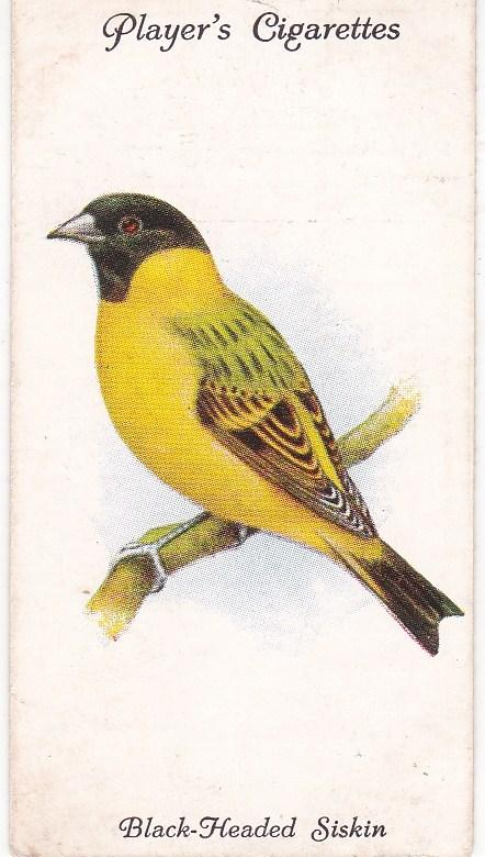 Cigarette Cards Players Aviary and Cage Birds No 46 Black-Headed Siskin