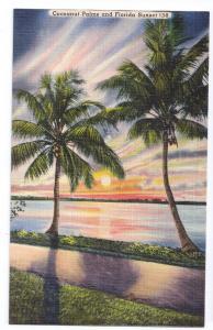 Cocoanut Palms Sunset Florida FL Coconut Trees Postcard