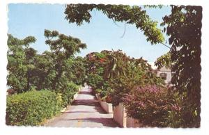 Country Lane Bermuda 1970 Chrome postcard Stamp