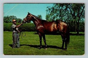 Lexington KY- Kentucky, Nashua, Horse, Chrome Postcard