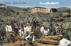Portugal Madeira Apanha de canas, native people