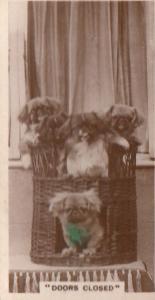 Doors Closed Cabaret Dog Dogs In Basket Antique Real Photo Cigarette Card