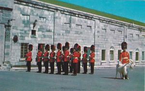 Regiment avec La Mascotte Royale (goat) , Quebec , Canada , 50-60s