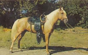 Horses Prize Palomino
