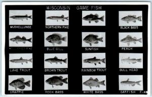 RPPC  WISCONSIN GAME FISH Identified PIKE, TROUT, BASS etc 1951 Fishing Postcard