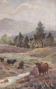 TUCK #9007, Cattle In The Highlands, Scotlands, UK, 1900-1910s