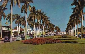 Florida Palm Beach Stately Royal Palms Along Royal Poinciana Way