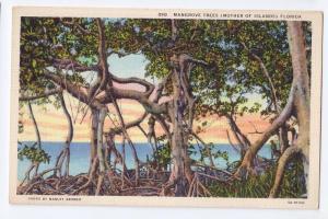 Mangrove Trees Florida Vintage Curteich Linen Postcard 1935