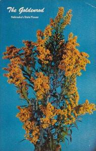 The Goldenrod Nebraskas State Flower Orchard Nebraska